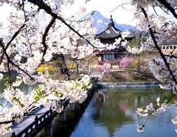DU LỊCH HÀN QUỐC: SEOUL – CHEJU – TIGERWORLD – EVERLAND – NAMI